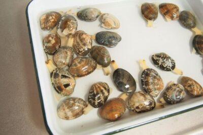 砂抜きのやり方と死んでる貝の見分け方